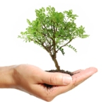 small-tree-in-hand