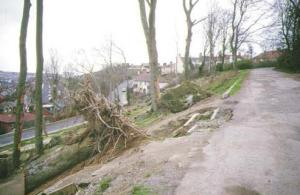 Hollingbury Woods after the 1987 storm